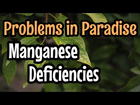 Problems In Paradise- Manganese Deficiencies In Avocado Trees