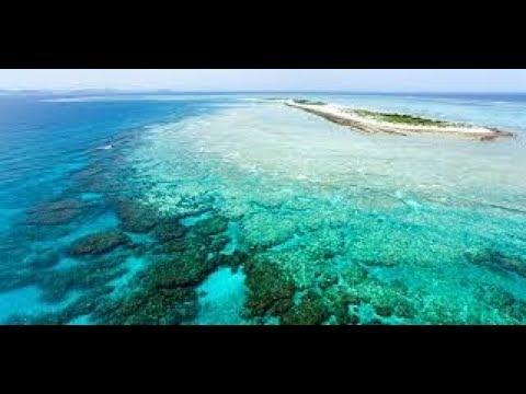 karang-penghalang-besar-(great-barrier-reef)