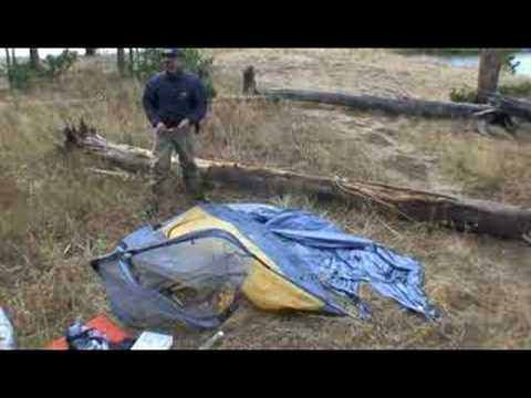 Tent Pouncing Bear | Yellowstone National Park