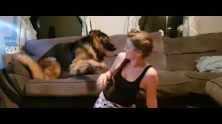Shadow the excited German Shepherd nearly takes owner out!