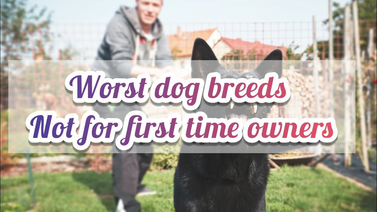 Top 10 worst dog breeds for first time Owners | top 10 |