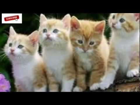 Ini Alasan Sebenarnya Kenapa Kucing Selalu Mengubur Kotorannya ...
