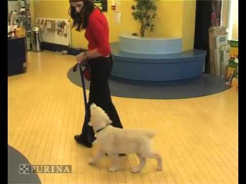 addestramento cani come addestrare il tuo cane addestra