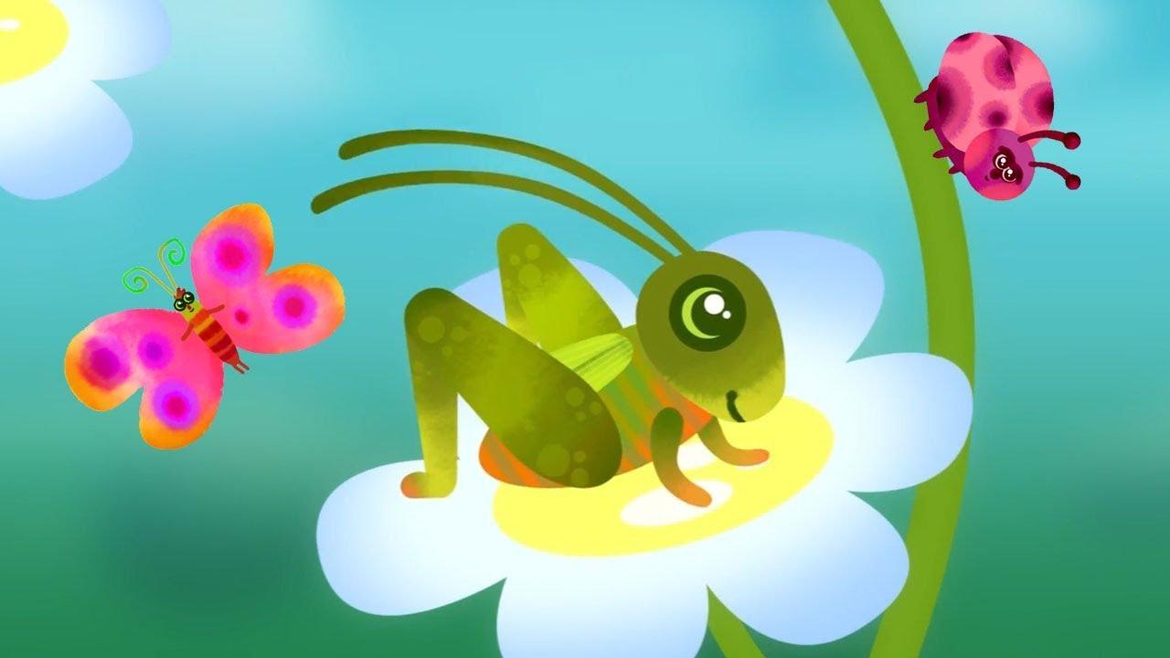 Ordina online magliette con tema cartone animato insetto