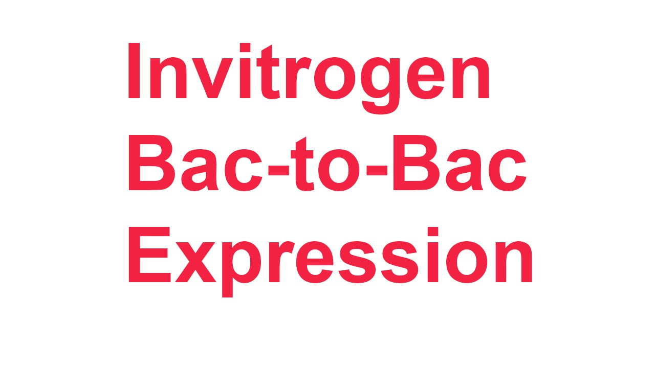 Review 2: Invitrogen Bac-to-Bac expression system