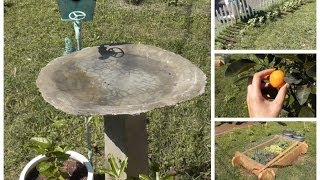 Cottage Living: Diy Bird Bath, Garden Update