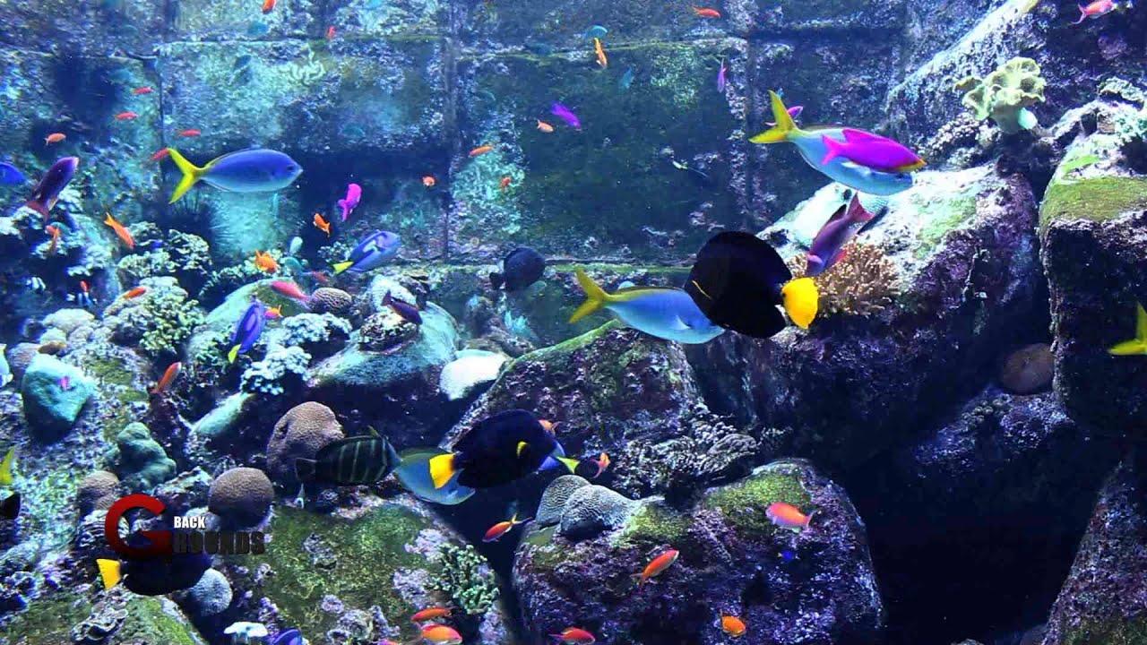 Fish Tank 3d Live Wallpaper For Pc Aquarium Royalty Free Stock Footage Hd 1080p Youtube