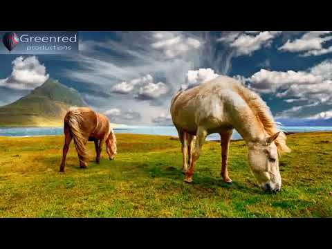Happiness Frequency - Serotonin, Dopamine and Endorphin Release Music, Binaural Beats for Happiness