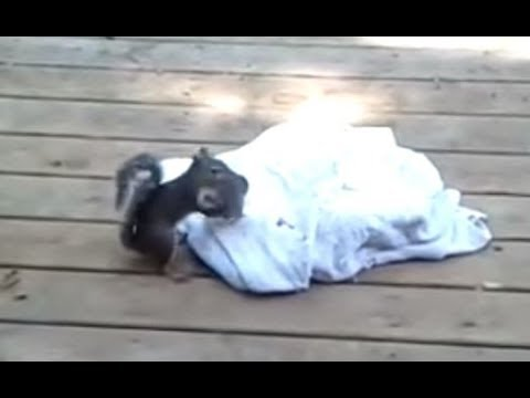 Mama squirrel coming and saving baby