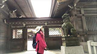 日本一周女ひとり旅266日目。新潟県弥彦神社で桜をみるLive
