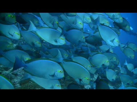 AMAZING WATERS of INDONESIA - A 90 Minutes HD RELAXATION VIDEO