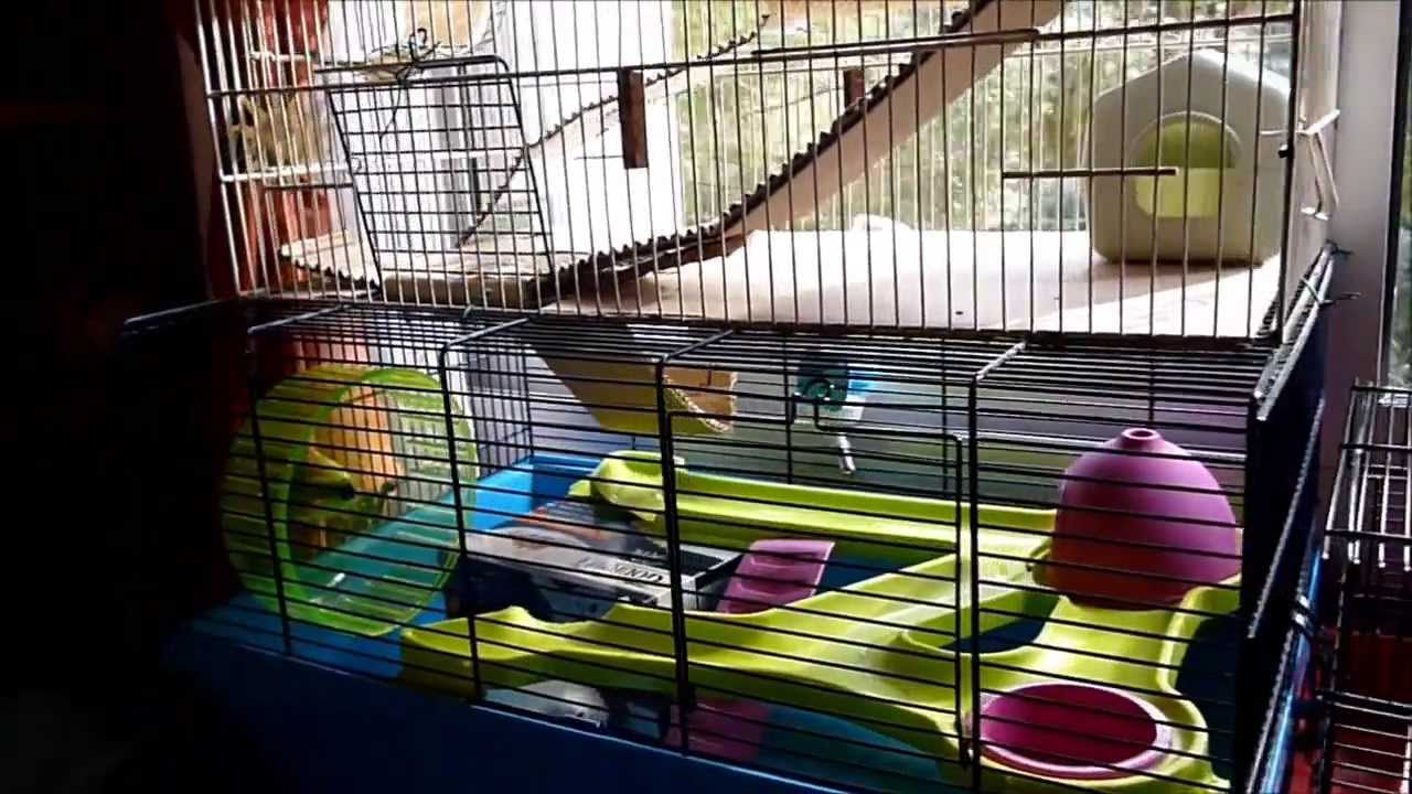 non aux hamsters dor s syriens dans des cages minuscules youtube. Black Bedroom Furniture Sets. Home Design Ideas