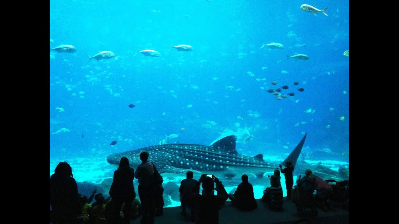 Georgia Aquarium Atlanta USA The largest in the World ...