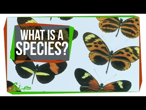 What Makes a Species a Species?