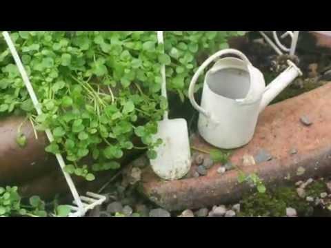 the best way to choose fairy garden plants - Fairy Garden Plants