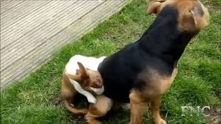 MATING OF ANIMAL WITH MALE & FELAME  ( DOG, CAT, PIG , ELEPHANT ...PET)