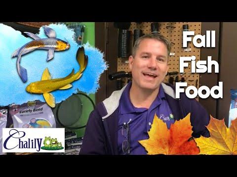 Autumn Fish Food