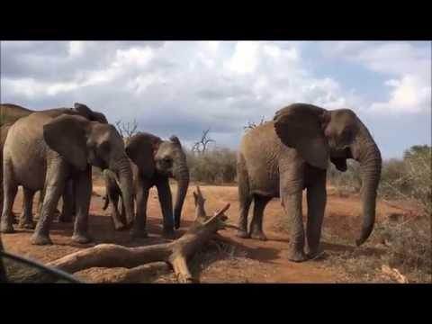Swaziland Safari, Africa
