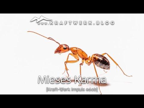 Mieses Karma [Post 151]