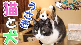 猫とうさぎの面白動画シリーズ、動く犬のぬいぐるみを始めて見た猫とう...