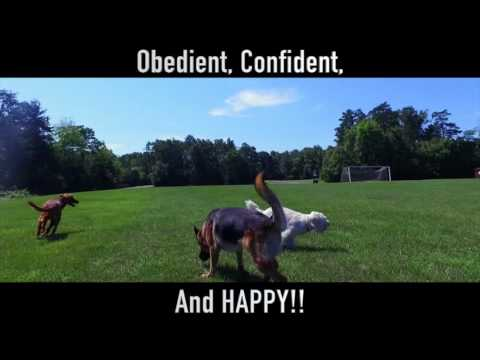 Happy, Confident, Free, and Amazing! Best Dog Training with Nick White