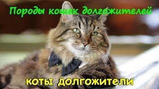 ПОРОДЫ КОШЕК ДОЛГОЖИТЕЛЕЙ  Breed cats centenarians