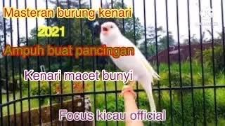 Download lagu Masteran kenari gacor durasi panjang dan jernih cocok buat burung kenari yang macet bunyi