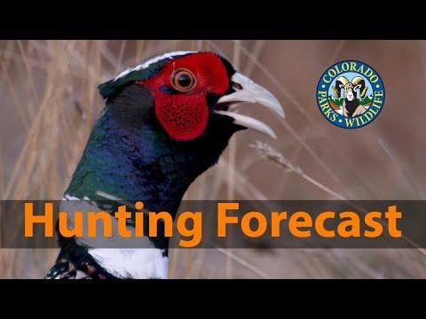 2019 Colorado Pheasant & Quail Forecast