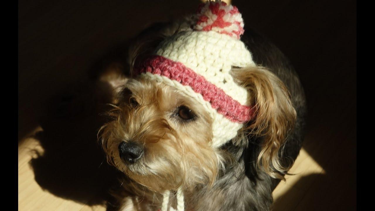 gorro para perros y para perras a crochet/how to crochet a dog hat ...