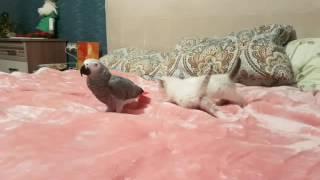 Жако и коты (new video)