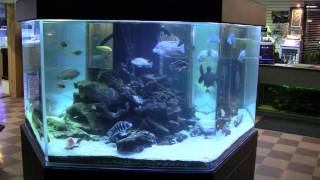 600 Gallon African Cichlid Hexagonal Tank 2011