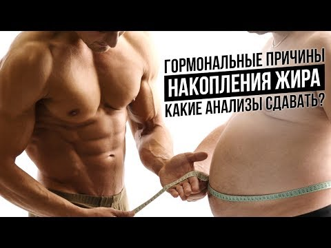 Какие гормоны влияют на ЛИШНИЙ ВЕС, накопление жира (Метаболизм, Обмен веществ, Анализы)