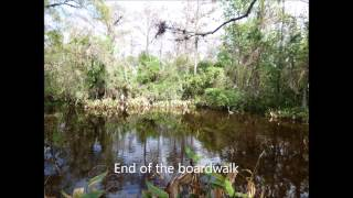Fakahatcee Strand Preserve State Park, Florida on Jan 2, 2015