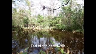 Fakahatcee Strand Preserve State Park, Florida on Jan 2, 2015