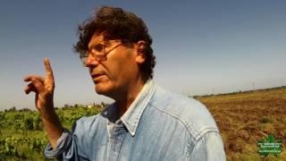 Француз Лакарен: отличный винодел и отвратительный виноградарь.