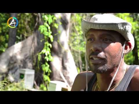 Miel de Martinique  Miellerie Manibar Apiculteur Martinique