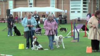 St Peter's School Dog Agility Display