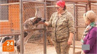 «Темир Хан» – приют, где собаки выбирают себе хозяев | Элита | ТВР24 | Сергиев Посад