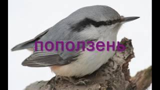 видеоролик зимующие птицы
