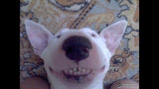 Счастливые собаки довольные жизнью