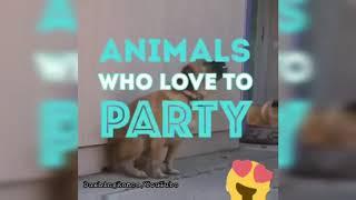 Animals Dance in Desi Theme 🤣😂   Funny Status video   DaxhingRomeo