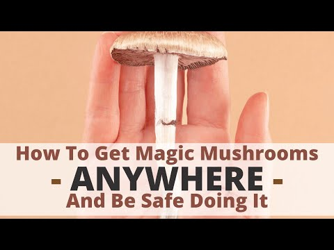 How To Get Magic Mushrooms Anywhere and Be Safe Doing It