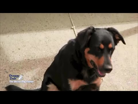 How To Train A Dog - Stop Your Dog From Running Away