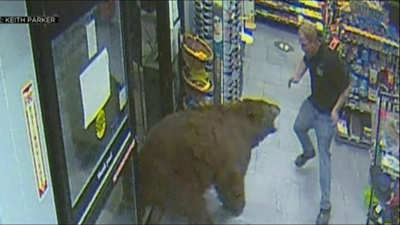 Confronting footage shows workers face-to-face with bears in the US