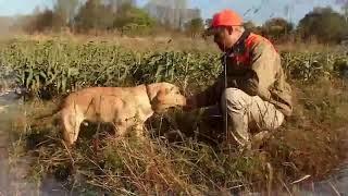 West Virginia DNR Hunting & Fishing 2019