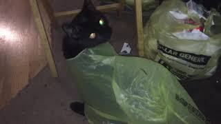 Funny Kitty in a bag