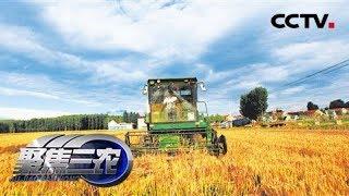 《聚焦三农》 20190713 麦收之后看收购  CCTV农业