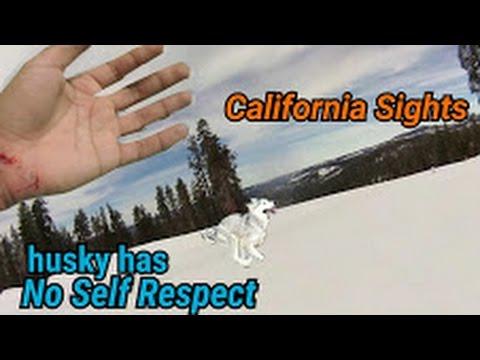 Siberian Husky Mushing ACCIDENT, Southern California Sights