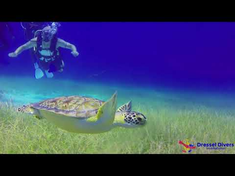 Scuba Diving In Montego Bay (Jamaica) - September 8th 2017 (Dressel Divers)