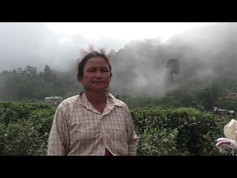 """Silence Flows"" _ The Life in Margaret's Hope Tea Garden, Darjeeling"